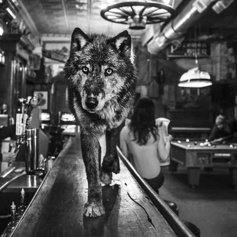 Artwork image: DAVID YARROW The Wolf of Main Street II