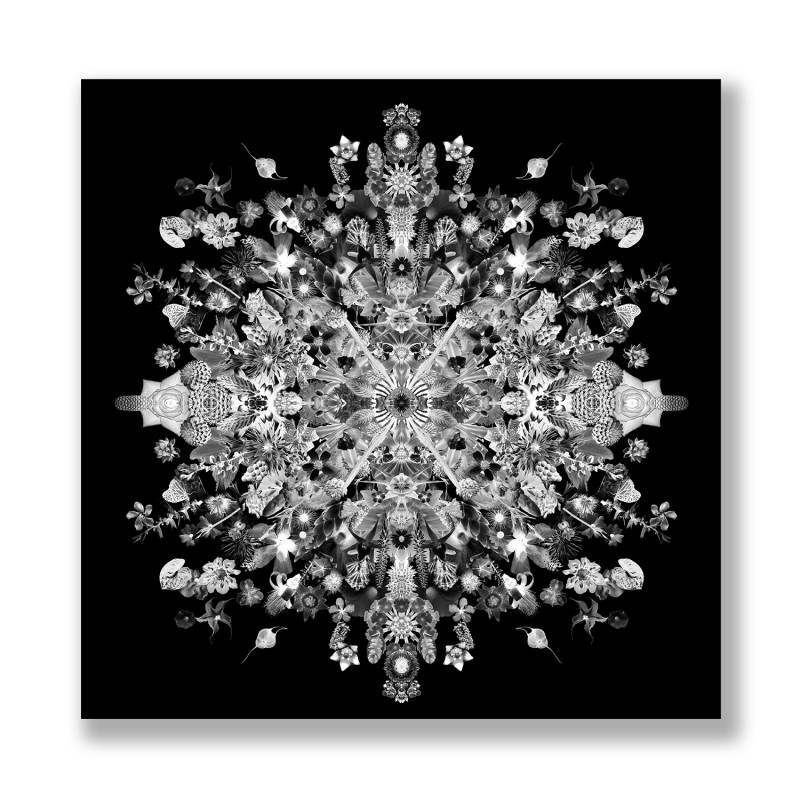 Re-Collections: Symmetrical, Concentric Xray, 2010