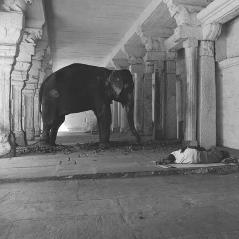<span class=&#34;artist&#34;><strong>Derry Moore</strong></span>, <span class=&#34;title&#34;><em>Elephant in Minakshi Temple, Madurai</em></span>