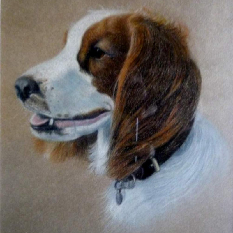 Mabel Gear RI ROI - Portrait of a Spaniel