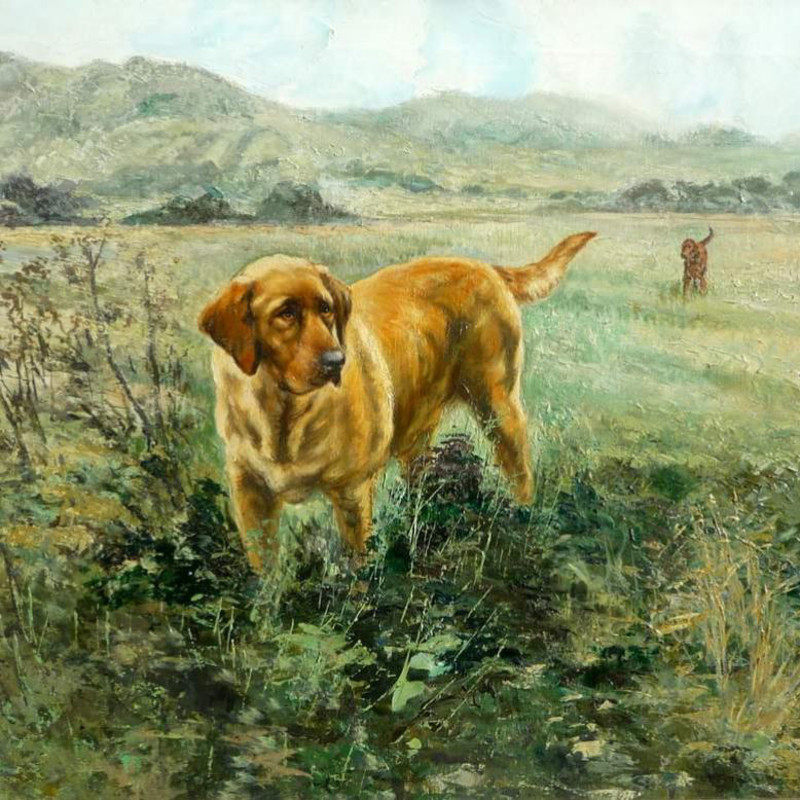 Henry Wilkinson - In the field - Golden Labrador and Red Setter
