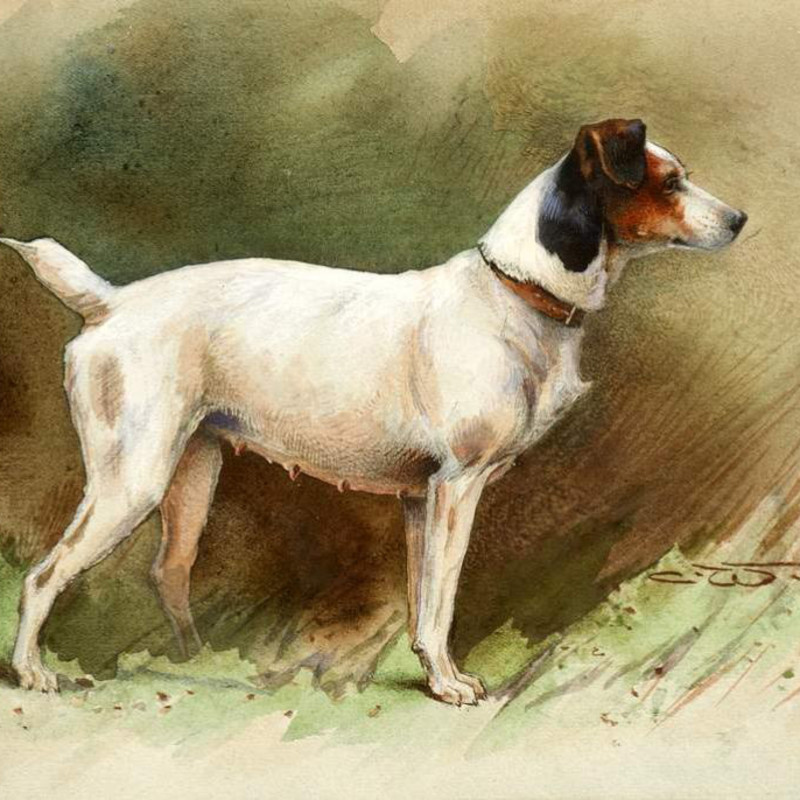 Charles Whymper RI - A Keen Jack Russell Terrier