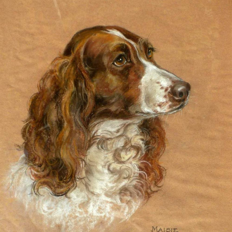 Marjorie Cox - Maisie - liver coloured Springer Spaniel