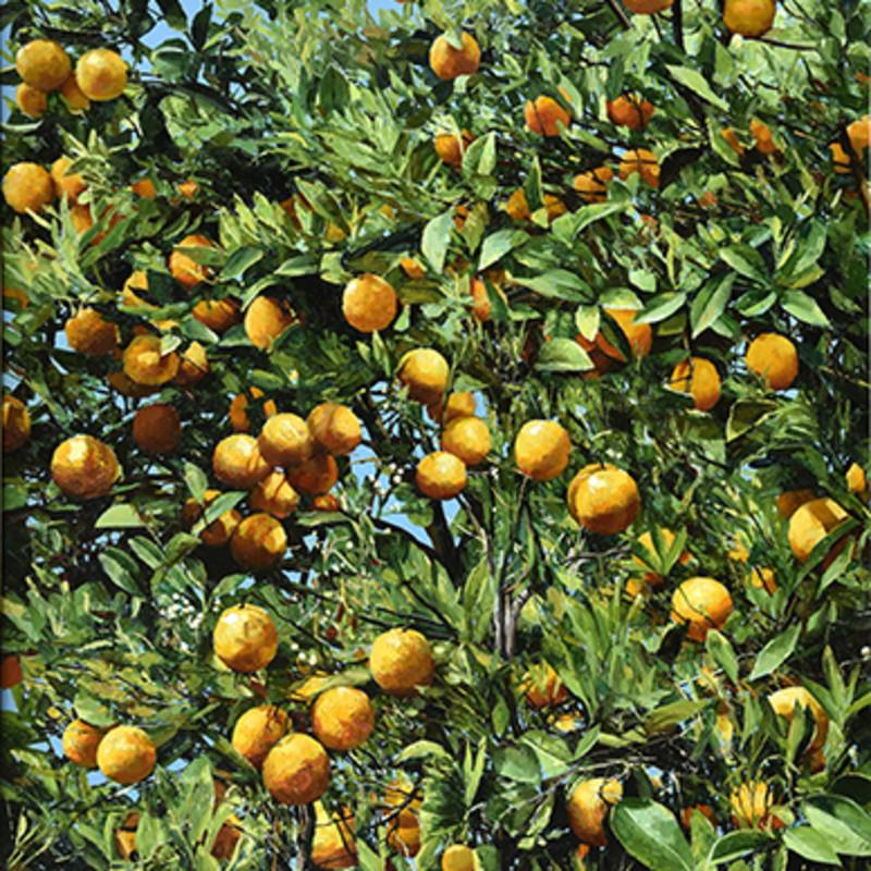 Alan Thompson - Orange tree