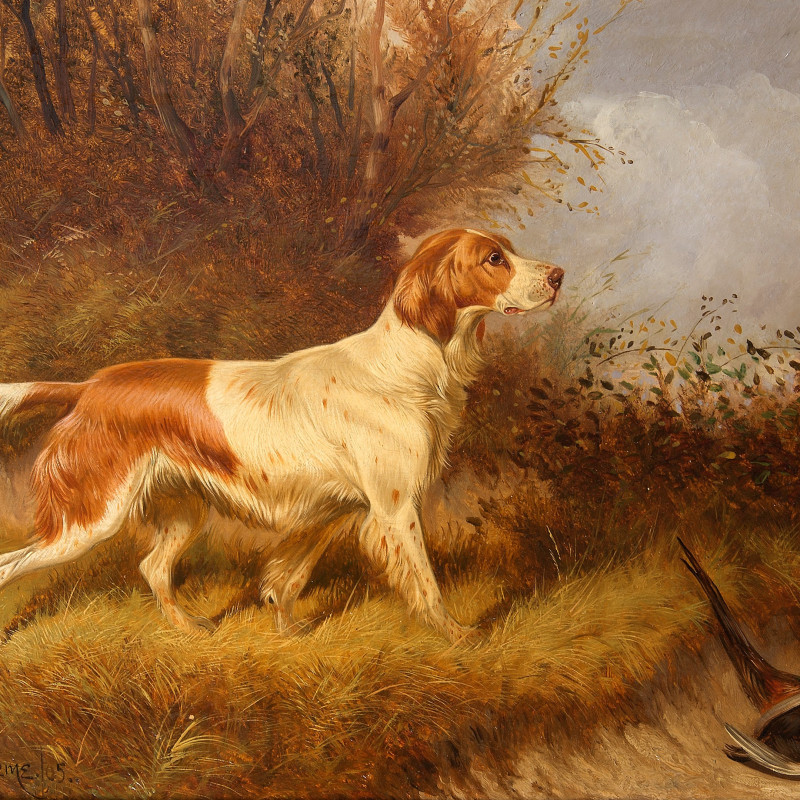 Colin Graeme (Roe) - Red & White Setter