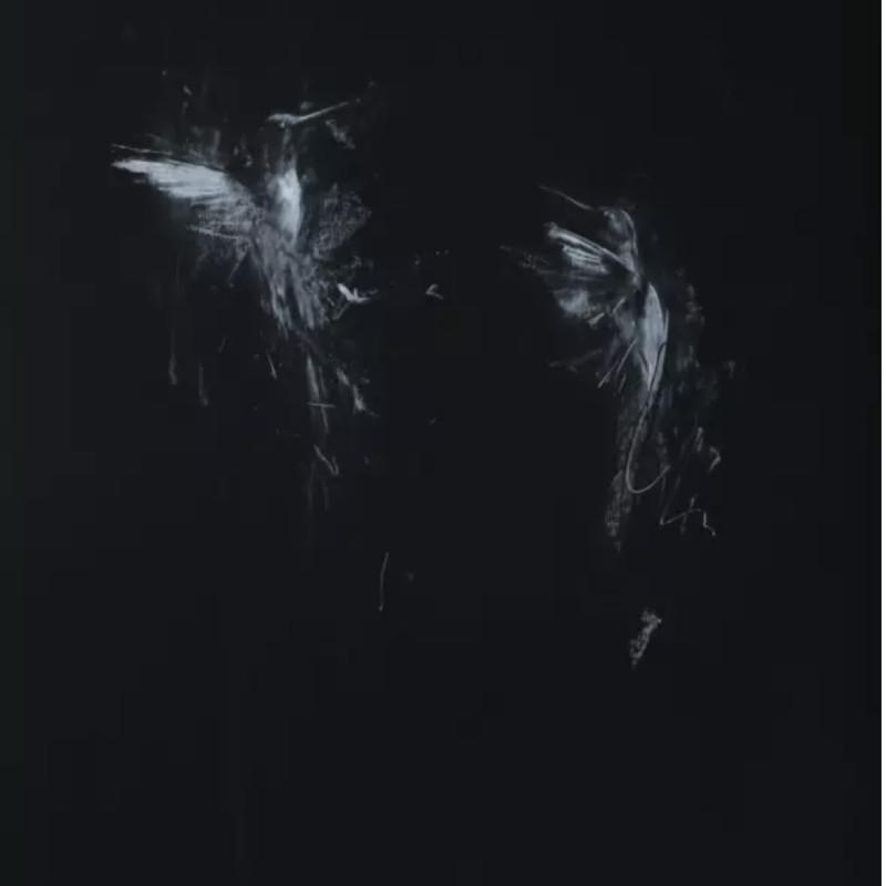 Jake Wood-Evans, Hummingbirds on Black 2