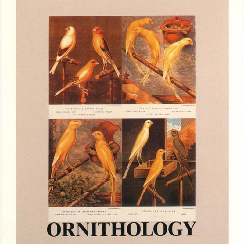 Peter Blake, O is for Ornythology