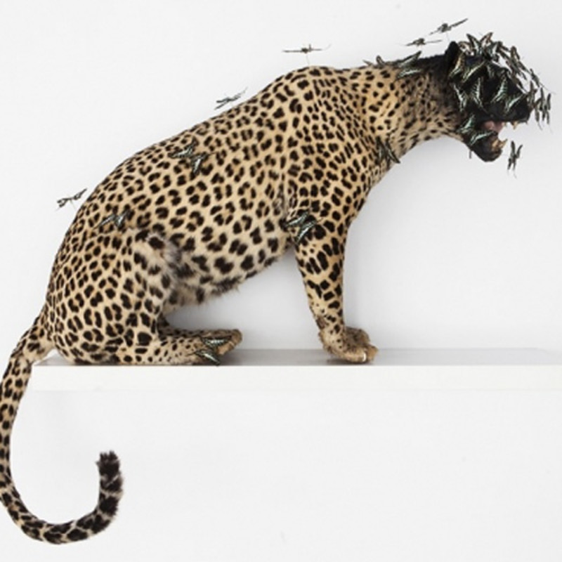 Leopard, 2015