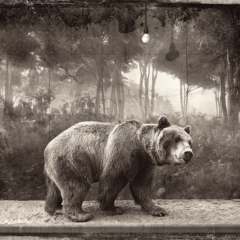 Jan Gulfoss - BROWN BEAR