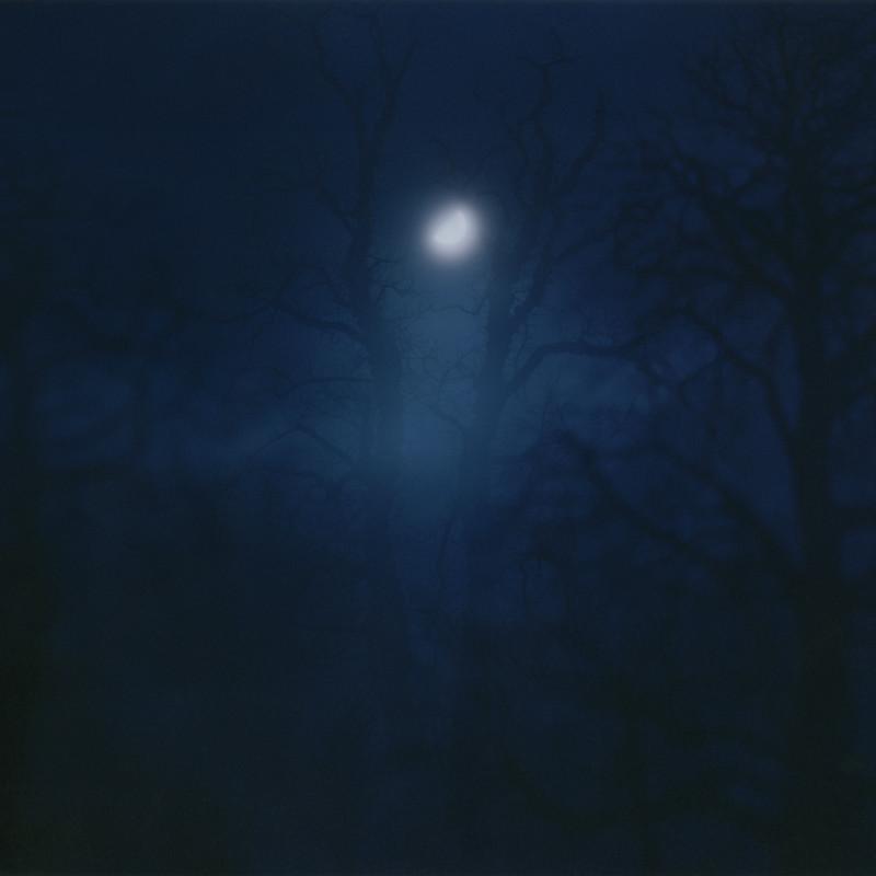 Nicholas Hughes, In Darkness Visible [Verse I] no. 12, 2007