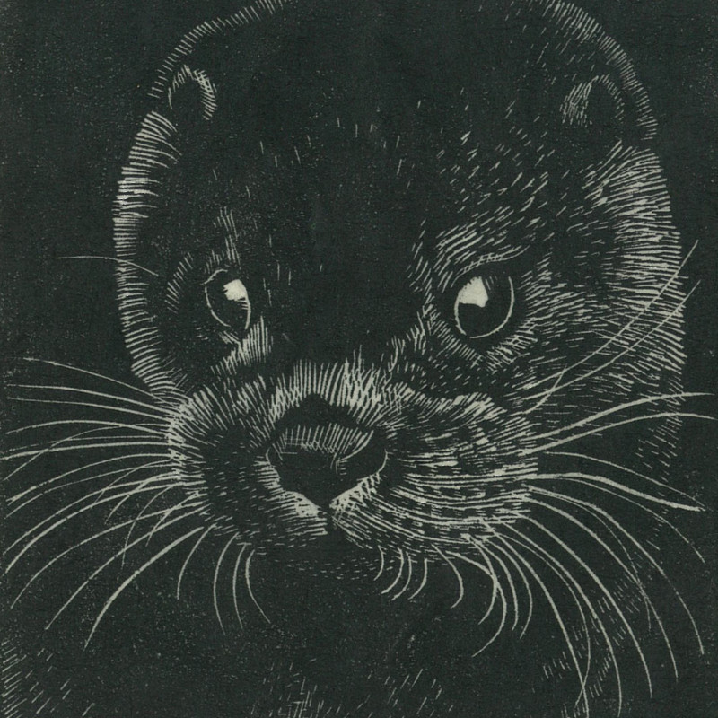 Charles Tunnicliffe 1901- 1979, Tarka. Wood engraving, signed in pencil C.F. Tunnicliffe, verso: printed on japan paper, 3 x 2 3/4 inches (7.8 x 7 cm)