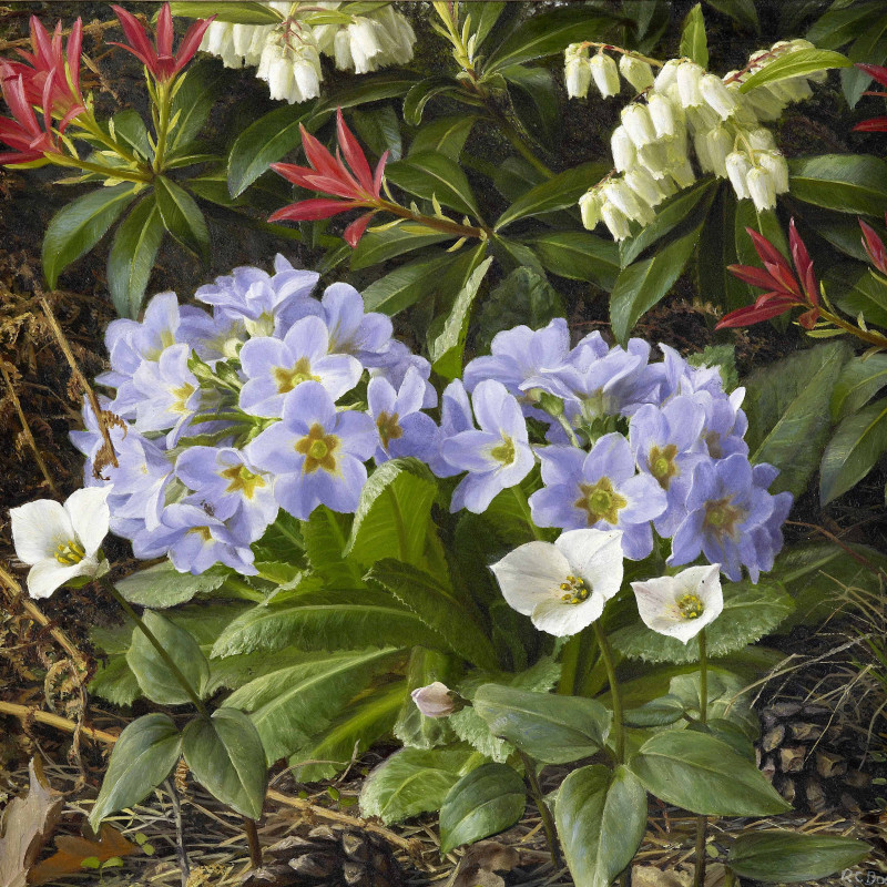 Raymond Booth 1929-2015. Primula sonchifolia with Trillium rivale, 1990. 8 1/2 x 9 1/4 inches (22 x 23.5 cm). Signed and dated