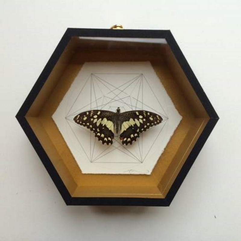 Jessica Albarn: Geometry of the Butterfly – Speckled Brown