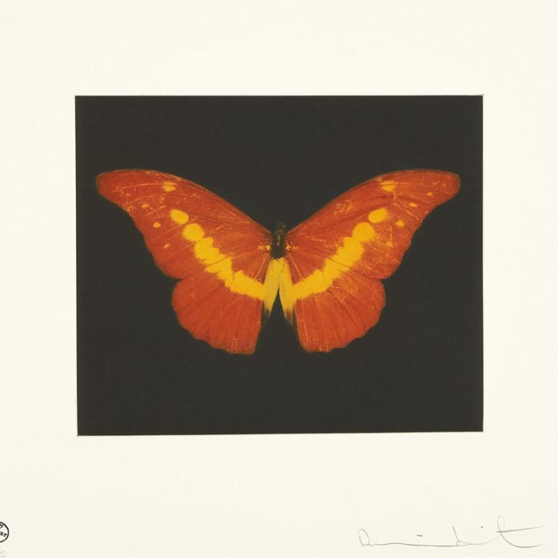 To Love, Butterfly Landscape