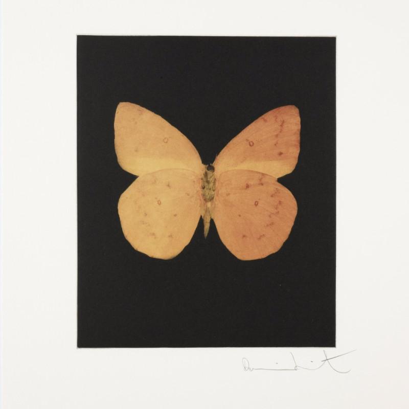 Prosperity, Butterfly Portrait