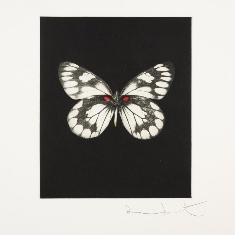 Regeneration, Butterfly Portrait