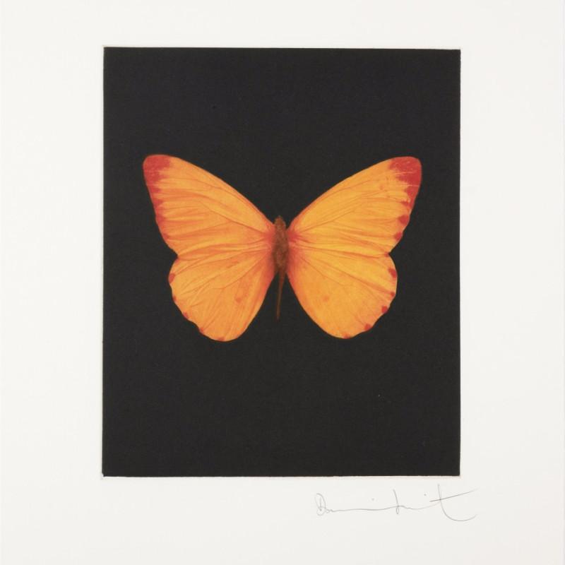 Hope, Butterfly Portrait