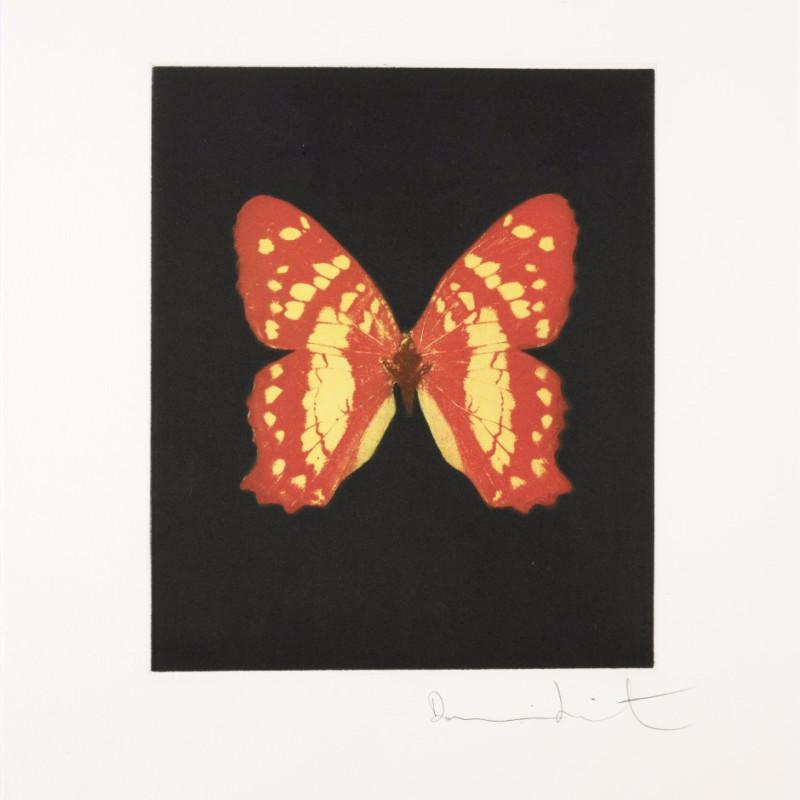 Emerge, Butterfly Portrait