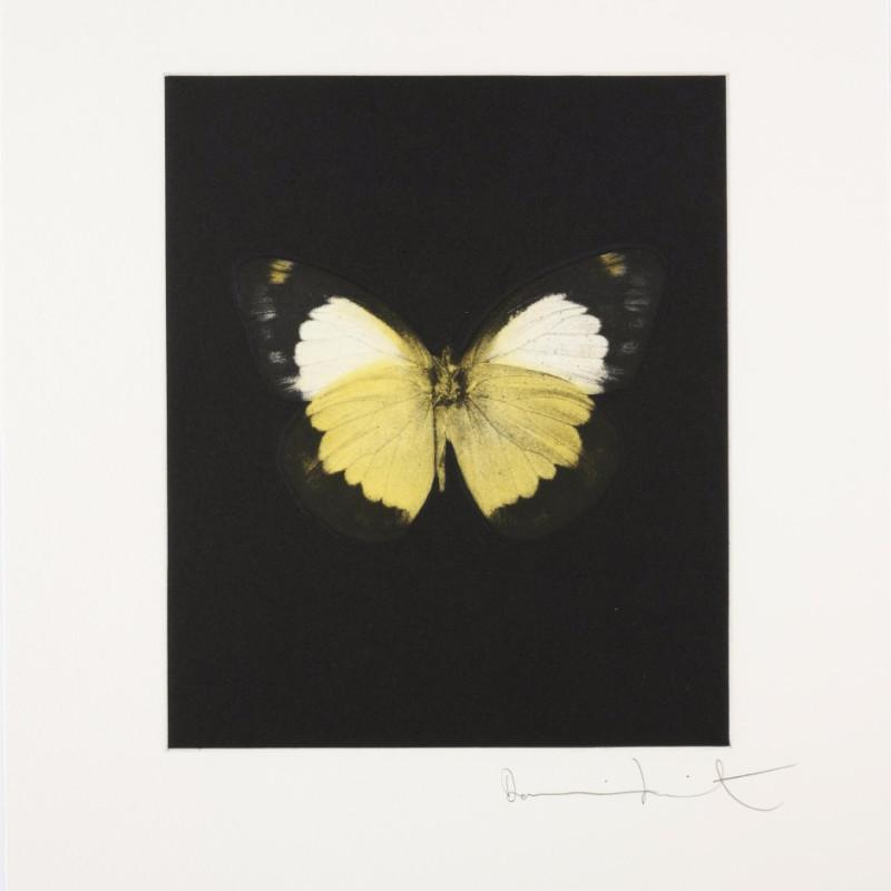 Reveal, Butterfly Portrait