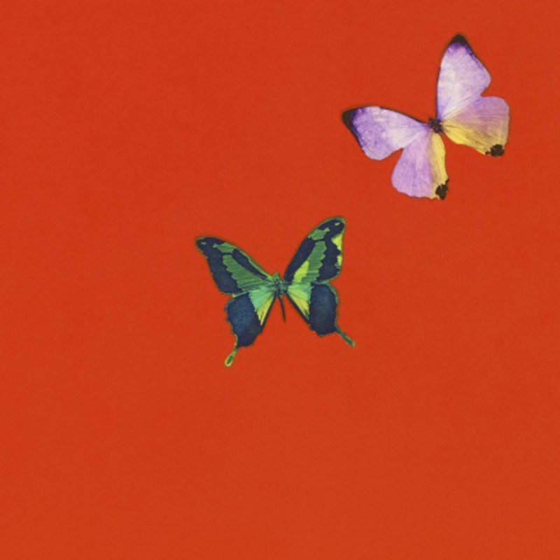 Damien Hirst's Butterfly Etchings Now Available