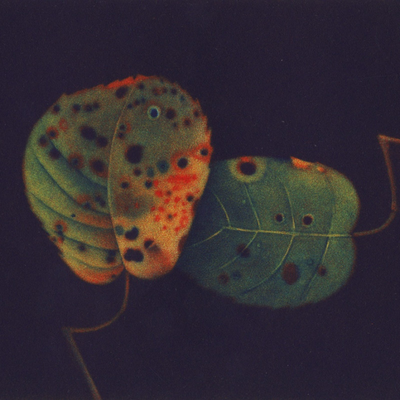 James McCreary ARE, Autumn Leaves II, mezzotint and aquatint