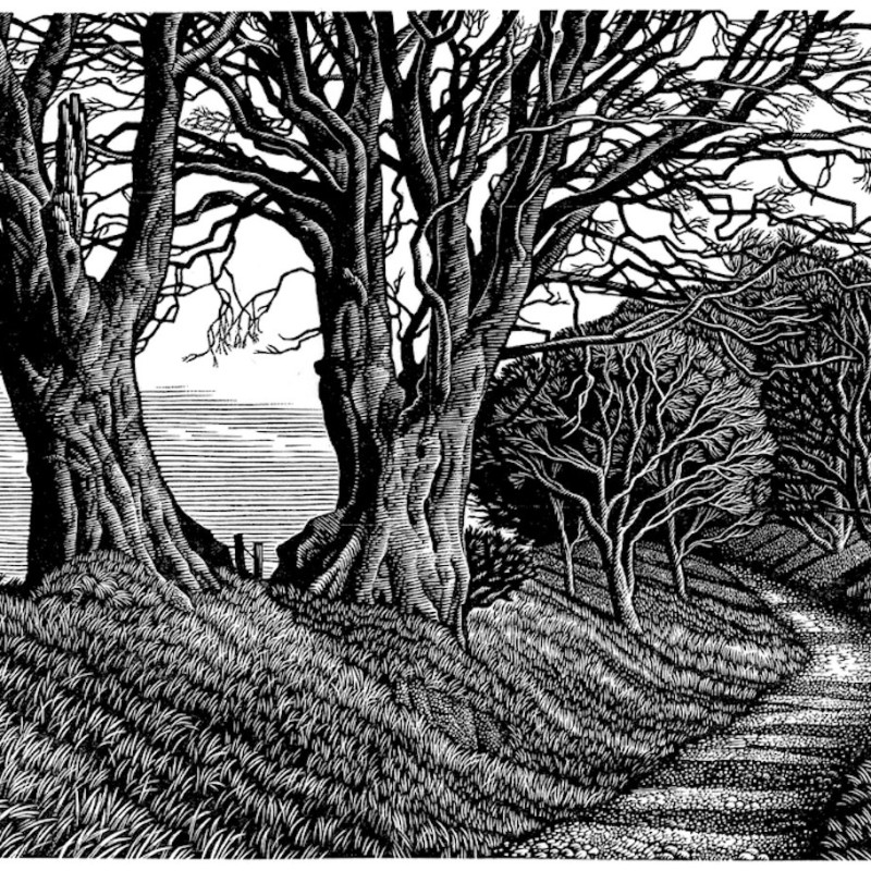 Lewesdon Hill Beeches, wood engraving