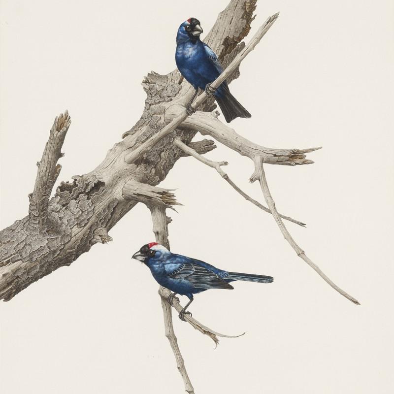 Blue Cardinals