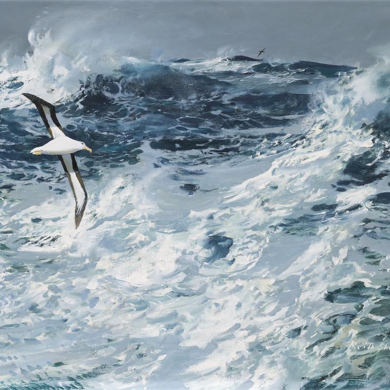 Circling Albatross