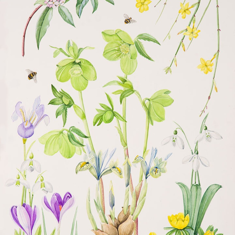 Ann Fraser, Early spring with green Hellebore and Daphne