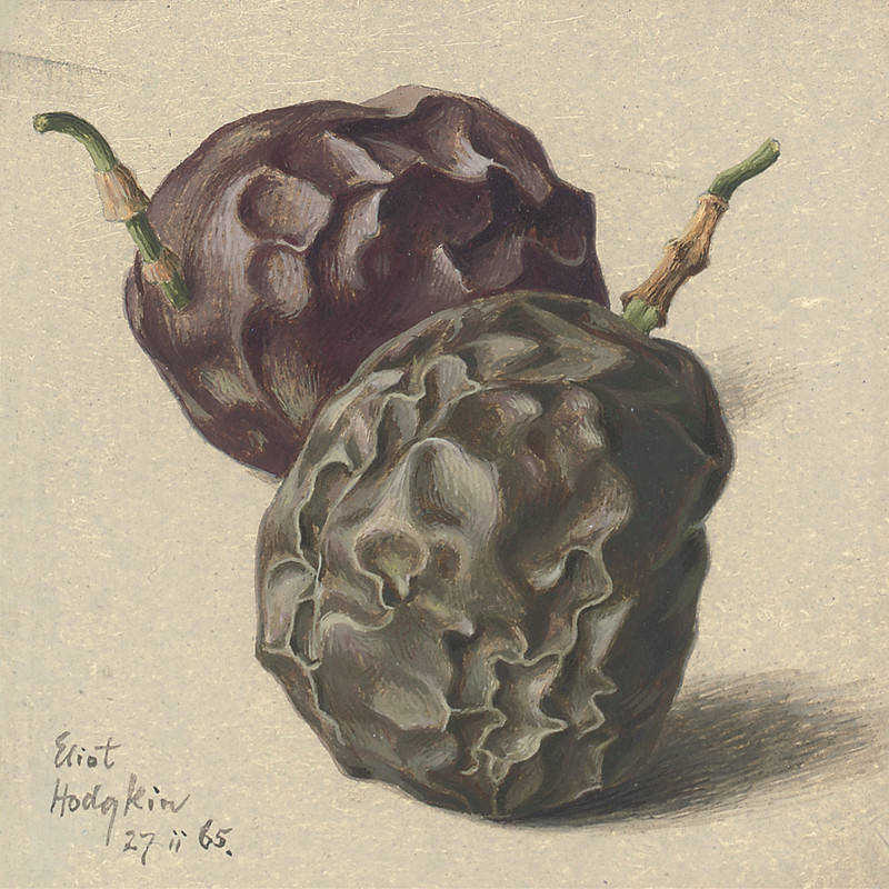 Eliot Hodgkin, Two Passion Fruit