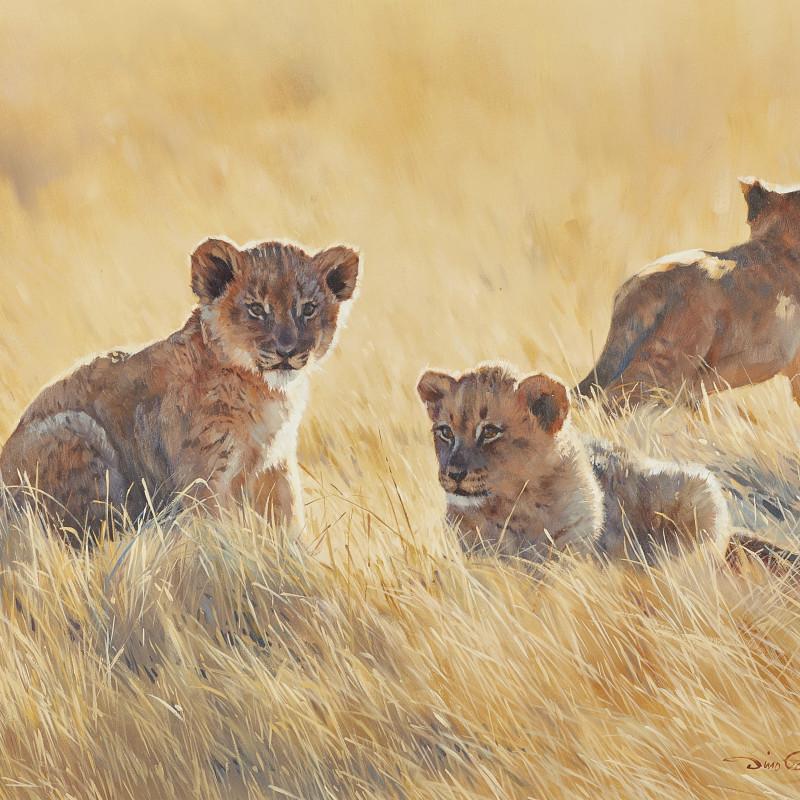 Dino Paravano, Lion Cubs