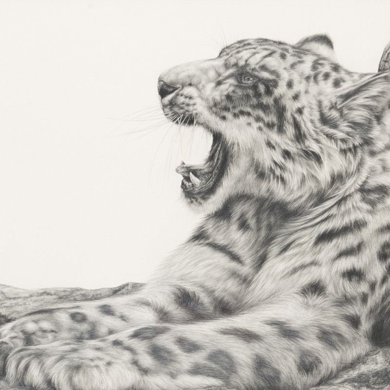 Keith Gray, Snow Leopard
