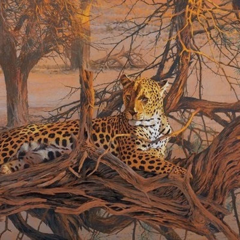 Kim Donaldson, Leopard, Kalahari Sundown