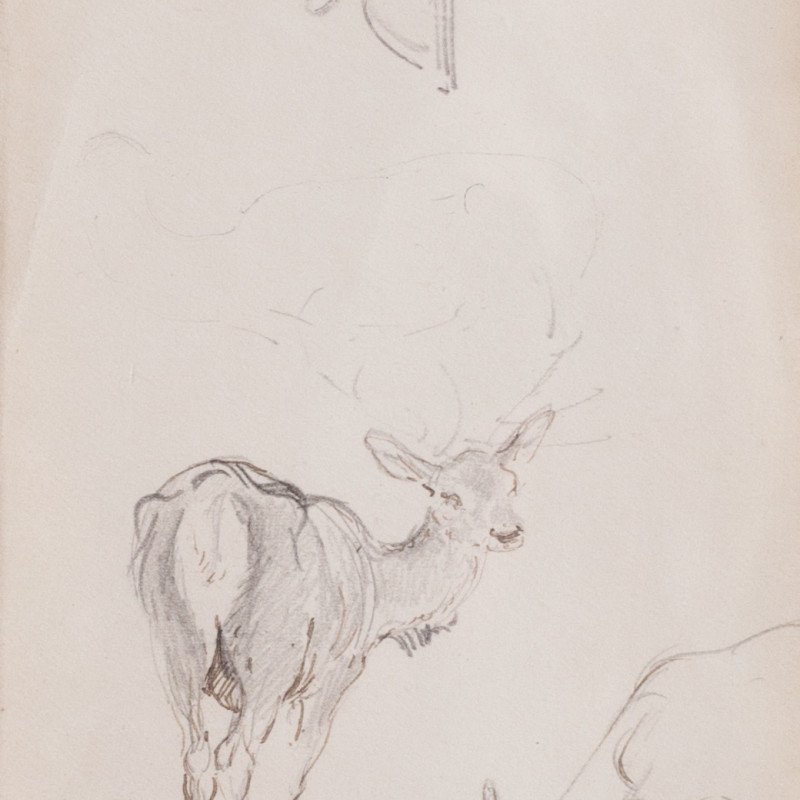 Double-sided deer study