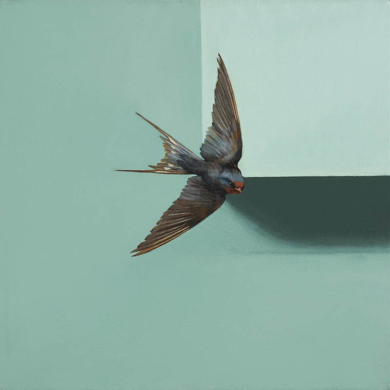 Jennifer Hooper, Swallow