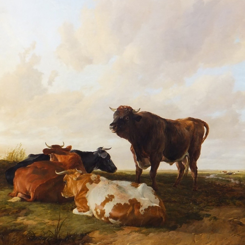 Lord of the Herd, a bull and three cows in a pasture, evening
