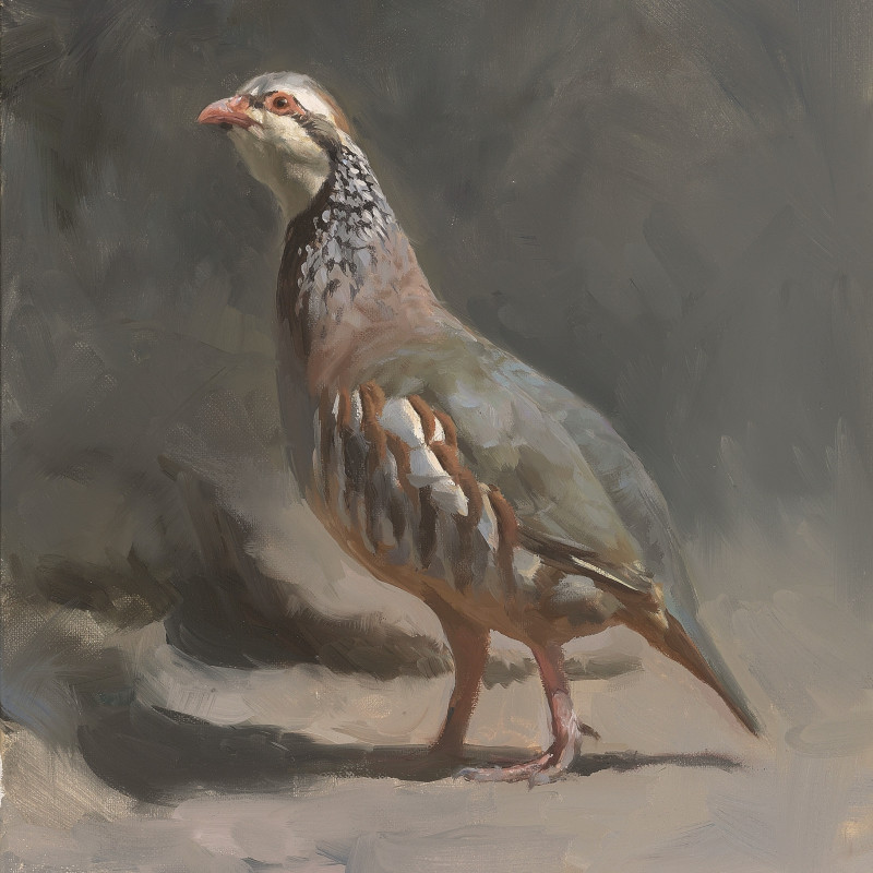 Female red-legged partridge