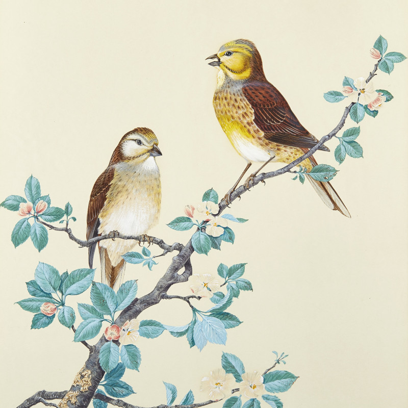 Robin Hill , Yellow Buntings
