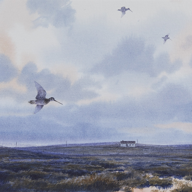 Owen Williams, Snipe over a marsh