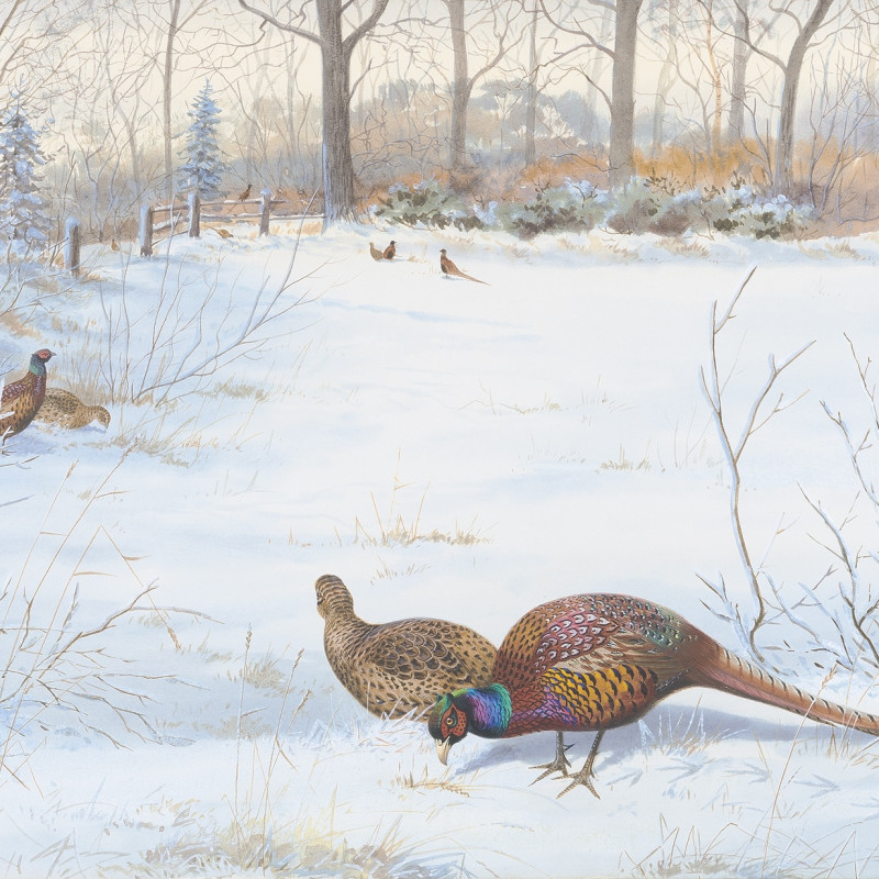 Philip Rickman, Pheasants in the snow