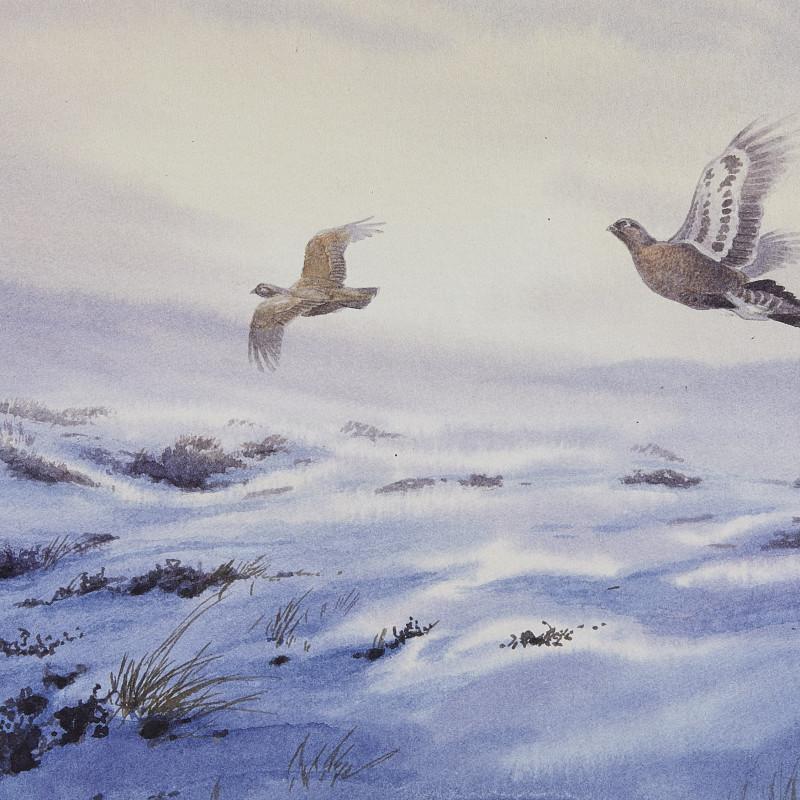 Grouse over a snowy moor