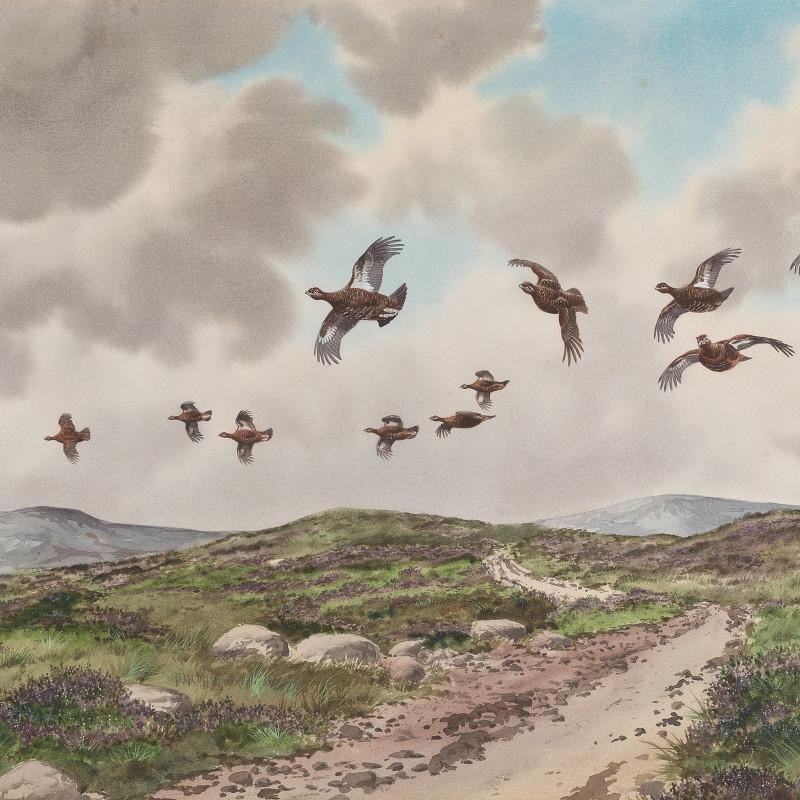 Robert Milliken, Grouse above the moorland