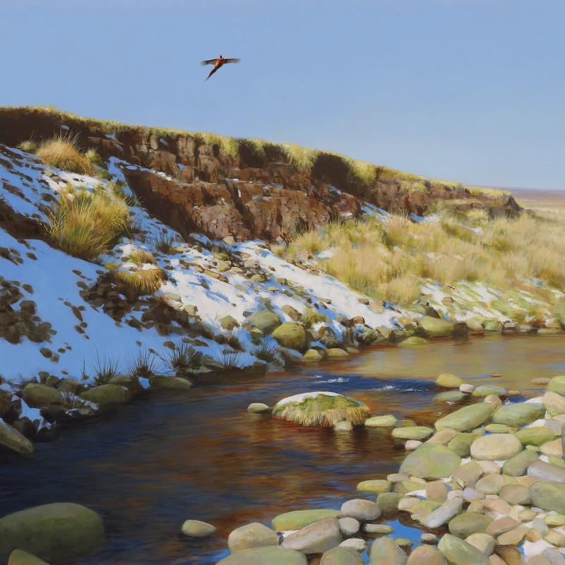Moorland Pheasant