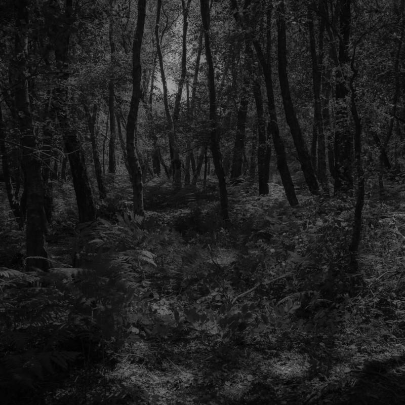 英国亚士顿森林,2018