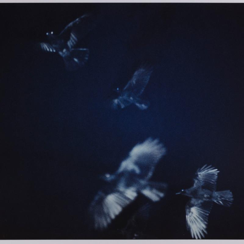 深濑昌久《烏景》 Raven Scenes 005,彩色珂罗版作品