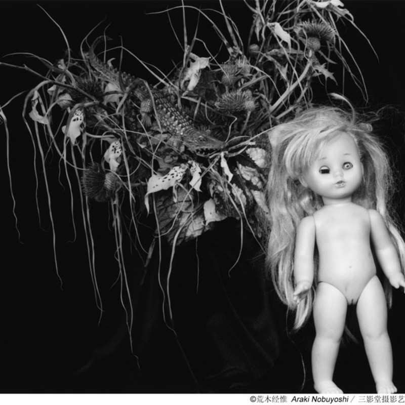 Nobuyoshi Araki's Sentimental Journey & Decadence in Paradise