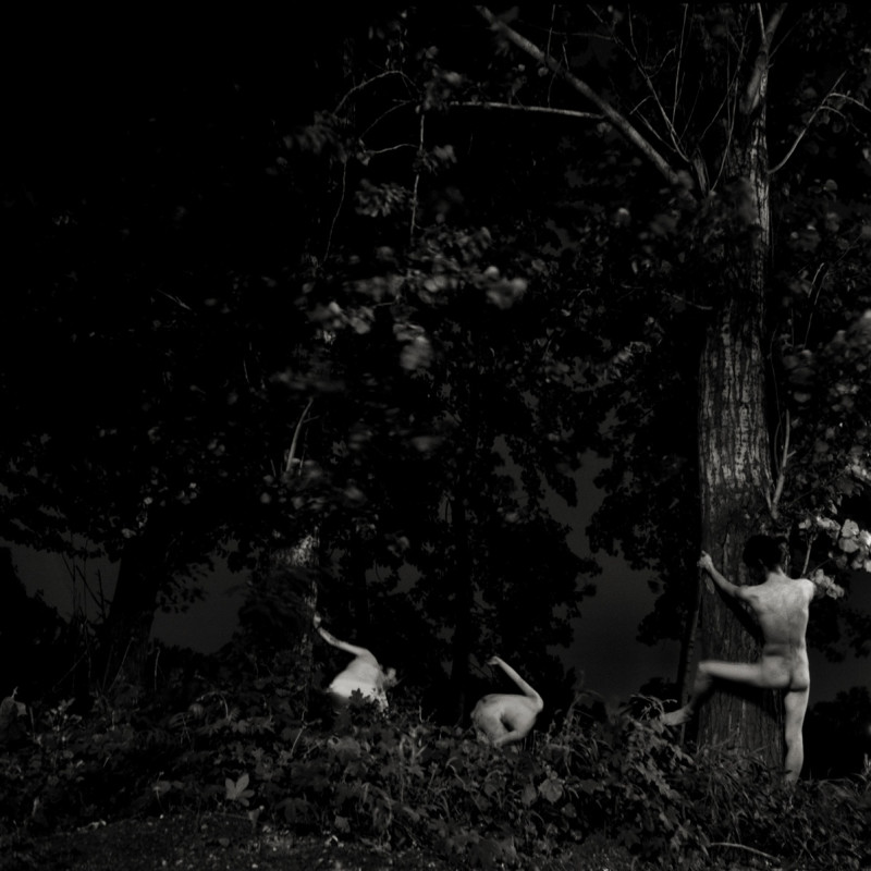 卢彦鹏 《移动的树4》