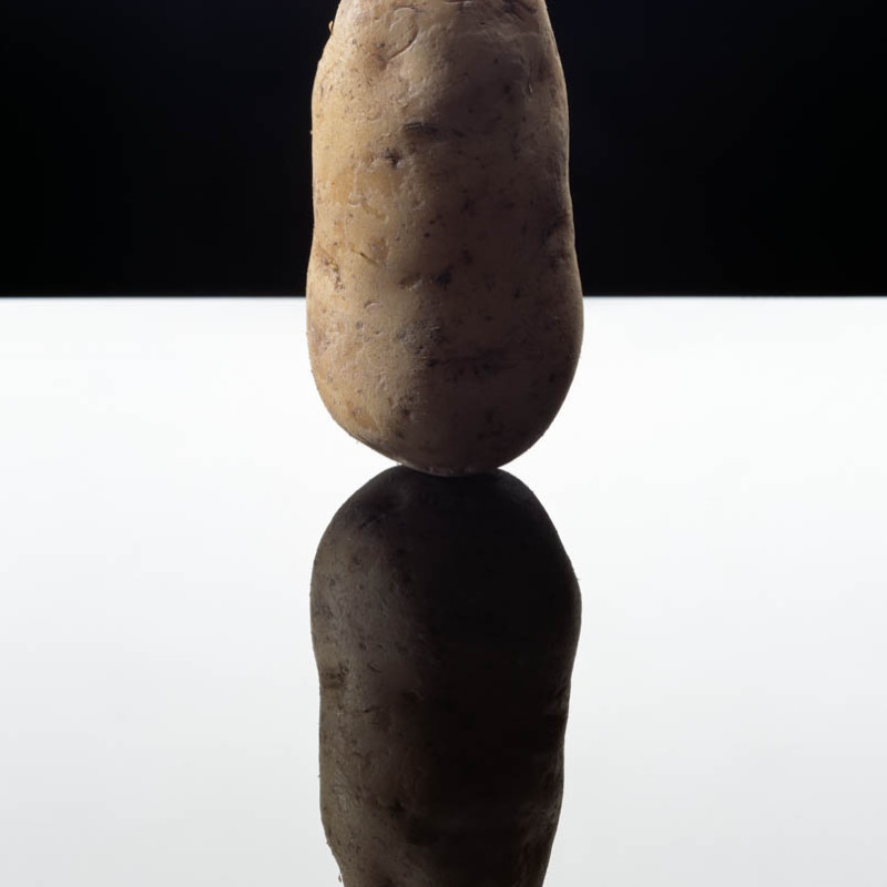 土豆 Potato, 2003 © Anuschka Blommers & Niels Schumm