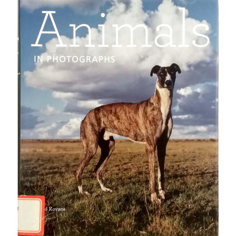 Animals In Photographs