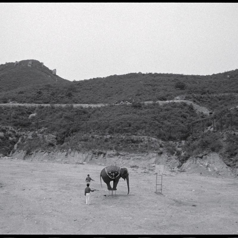 《象的杂技,北京》 Elephant Acrobat, Beijing 1998
